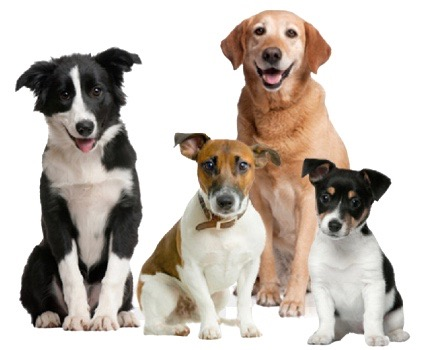 Addestramento cani on line